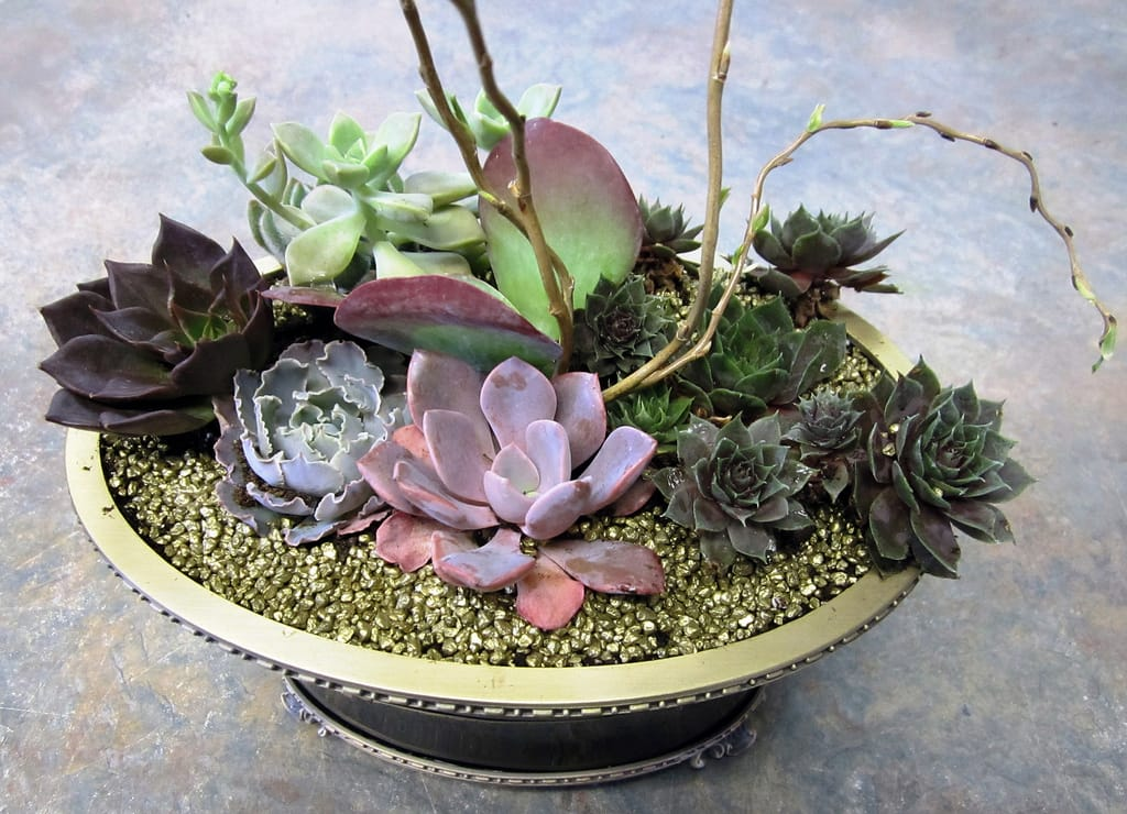 creating your dish garden - Dish Garden Plants