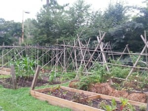 Stone Mountain Community Garden