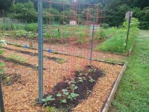 Woodstock Community Garden