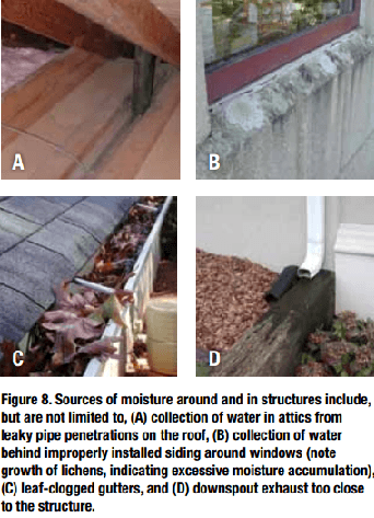 Water is the condition allowing many household pests to persist