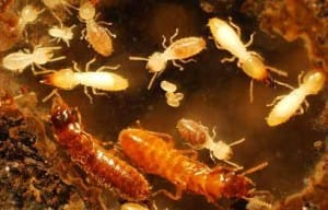 Florida Scientists Discover Super Termites, and They're Not Genetically Modified