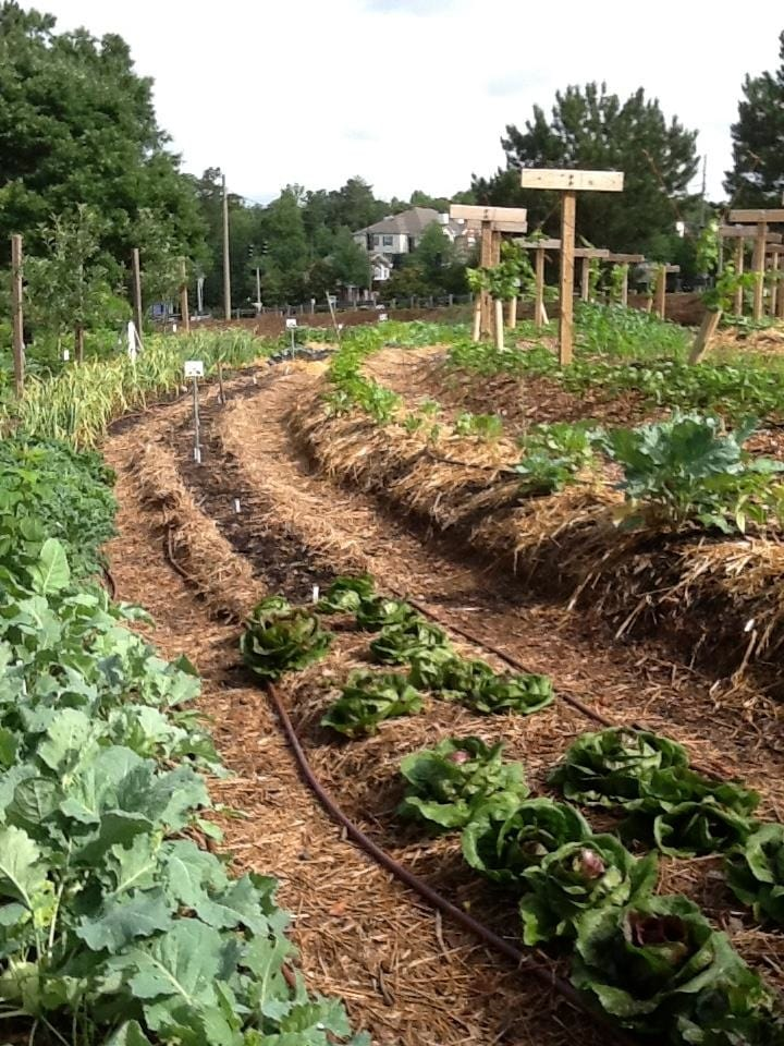 The Urban Vegetable Garden At Gwinnett Tech