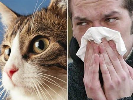 catallergy