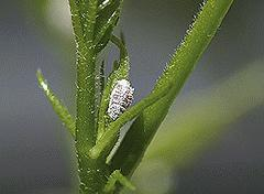 Don't Move Mealybugs Inside