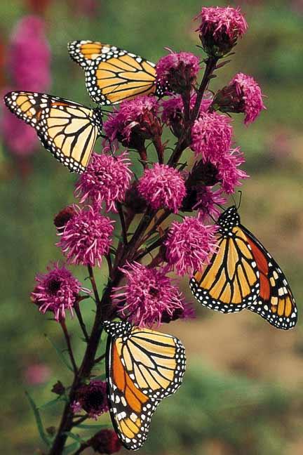 panee-butterfly-garden