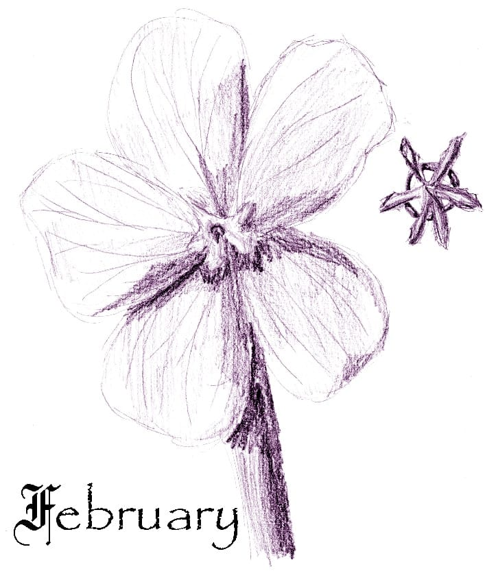 February Chores for Your Georgia Garden