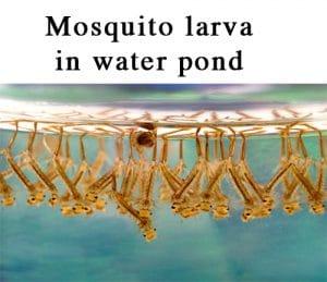 Mosquitos in Your Georgia Garden
