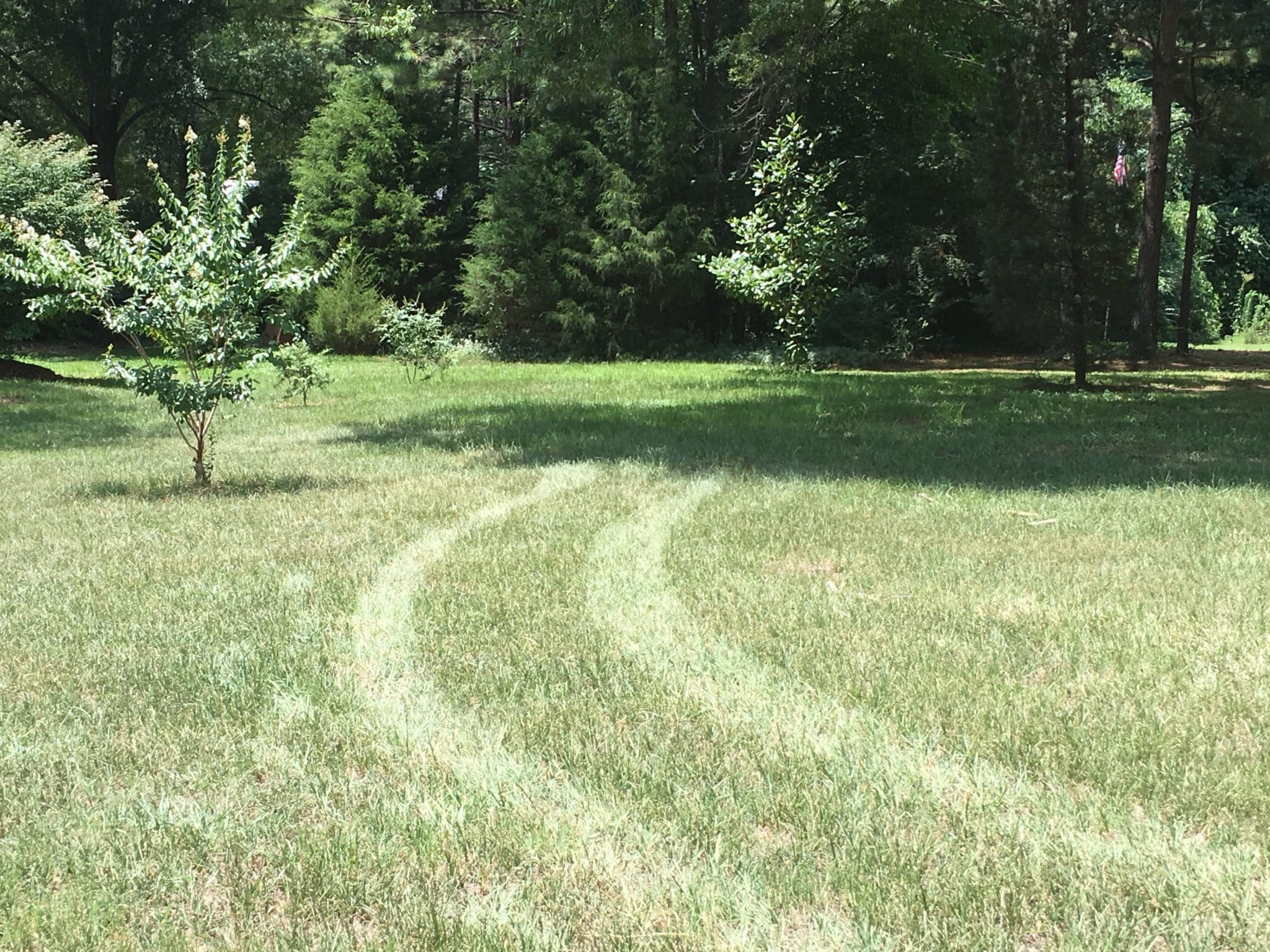 Turfgrass_Drought