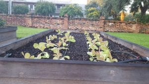 Plant Cool-Season Vegetables Now - a Guest Post by Paul Pugliese