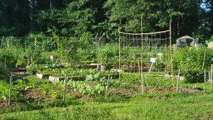 Warm-Season Vegetable Planting Chores for Georgia