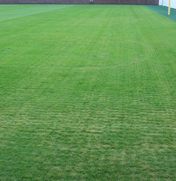 Photo of turfgrass disease Bermudagrass Leaf Spot
