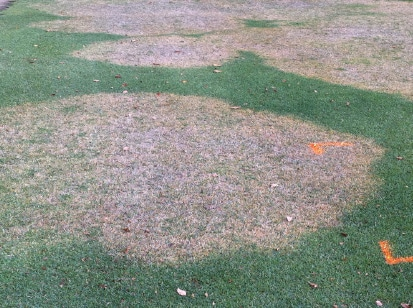 photo of turfgrass disease large patch